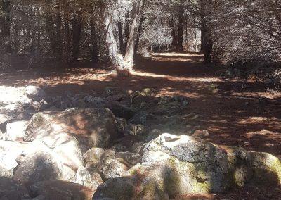 Shinrin Yoku ~ Forest Bathing