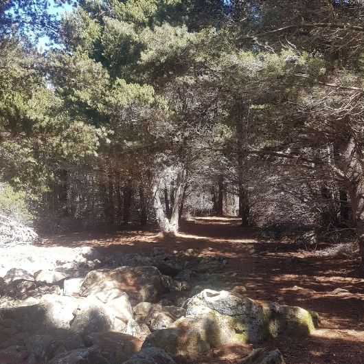 Forest Bathing Track and Glacial Mill